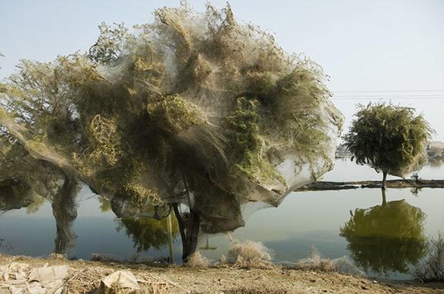 """Những khoảnh khắc thế giới tự nhiên khiến con người phải """"dựng tóc gáy"""" - 9"""