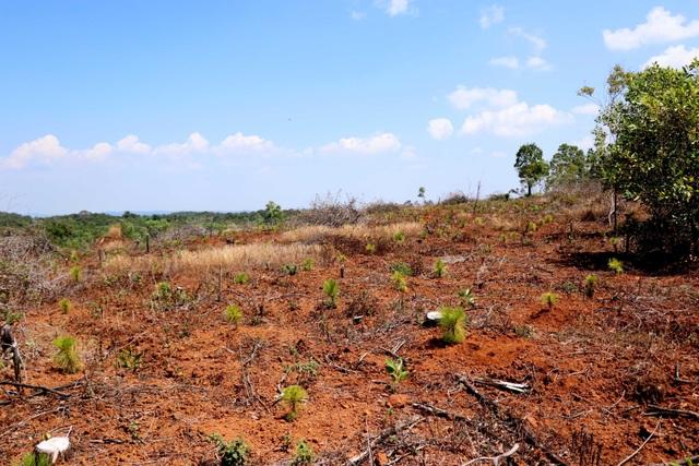 Bất ngờ bị cắt giảm diện tích giao rừng, nồi cơm của người dân cũng bị thu hẹp lại! - 2