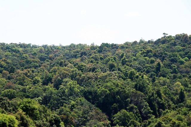 Bất ngờ bị cắt giảm diện tích giao rừng, nồi cơm của người dân cũng bị thu hẹp lại! - 4