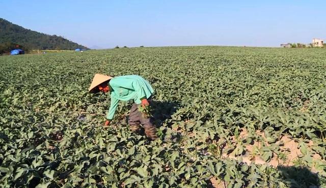Vụ côn đồ cướp bát cơm của nông dân nghèo: Yêu cầu 32 đối tượng viết cam kết! - 1