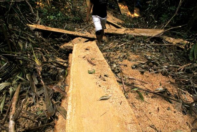 Phá rừng phòng hộ Sông Tranh Quảng Nam