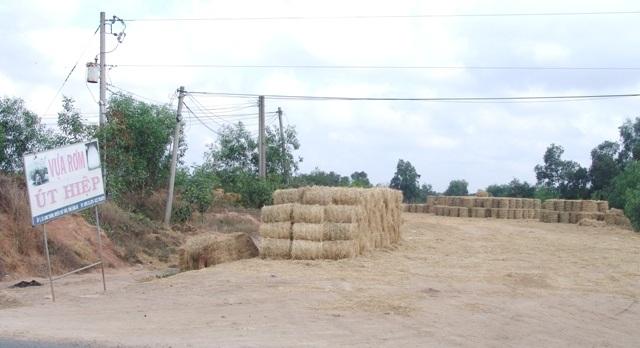 """Rơm """"đắt xắt ra miếng"""", nông dân thu tiền triệu mỗi ngày - 1"""