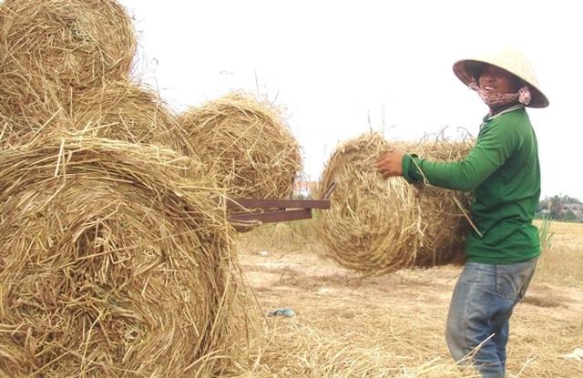 """Rơm """"đắt xắt ra miếng"""", nông dân thu tiền triệu mỗi ngày - 6"""