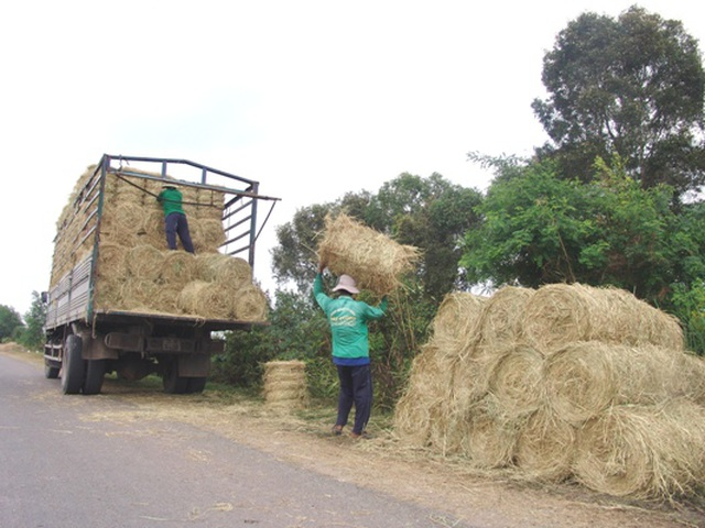 """Rơm """"đắt xắt ra miếng"""", nông dân thu tiền triệu mỗi ngày - 7"""