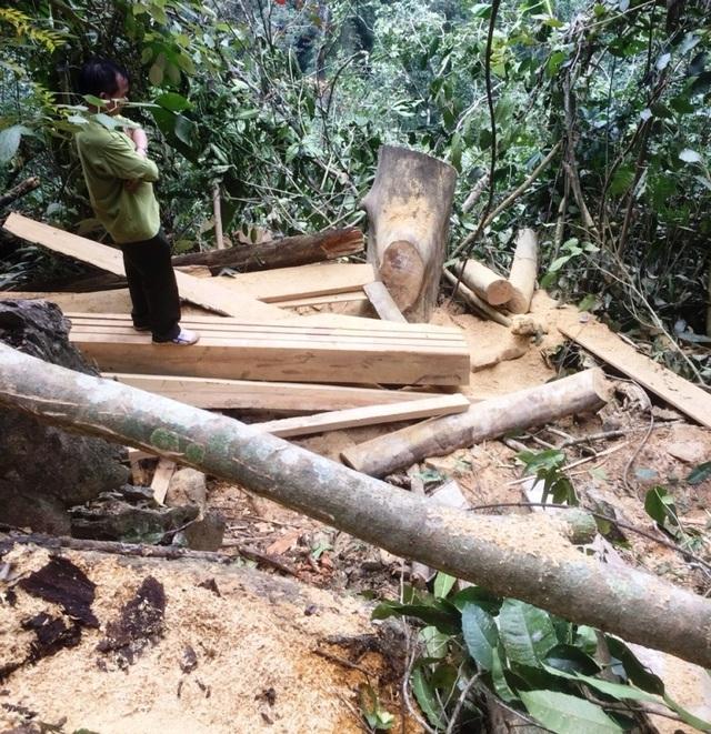 phá rừng 3.jpg