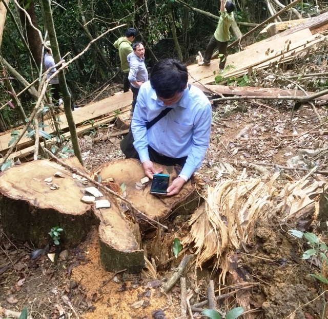 phá rừng 4.jpg
