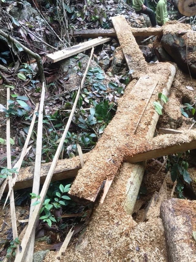 phá rừng 6.jpg