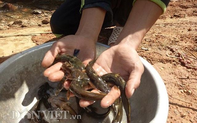 Tứ độc đặc sản cá cực hiếm ở miền núi, có tiền cũng khó mua - 17