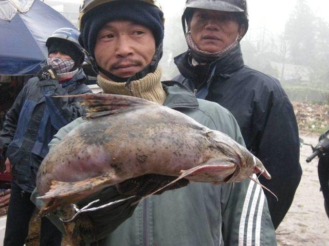 Tứ độc đặc sản cá cực hiếm ở miền núi, có tiền cũng khó mua - 2