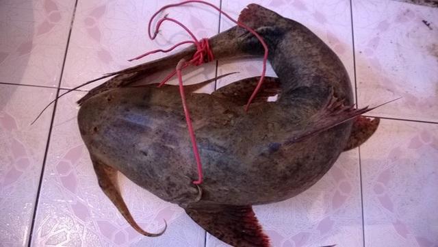 Tứ độc đặc sản cá cực hiếm ở miền núi, có tiền cũng khó mua - 4