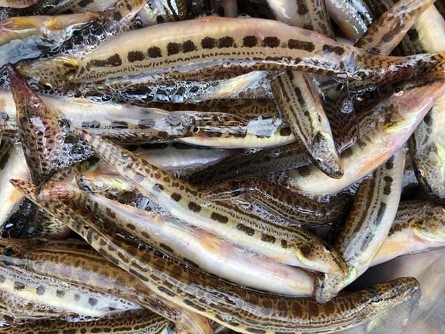 Tứ độc đặc sản cá cực hiếm ở miền núi, có tiền cũng khó mua - 7