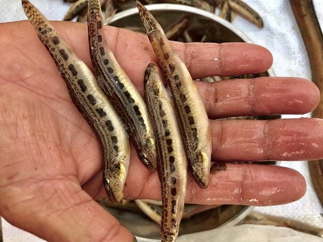 Tứ độc đặc sản cá cực hiếm ở miền núi, có tiền cũng khó mua - 8