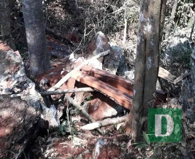 Phát hiện thêm một vụ phá rừng nghiêm trọng tại Quảng Bình - 3