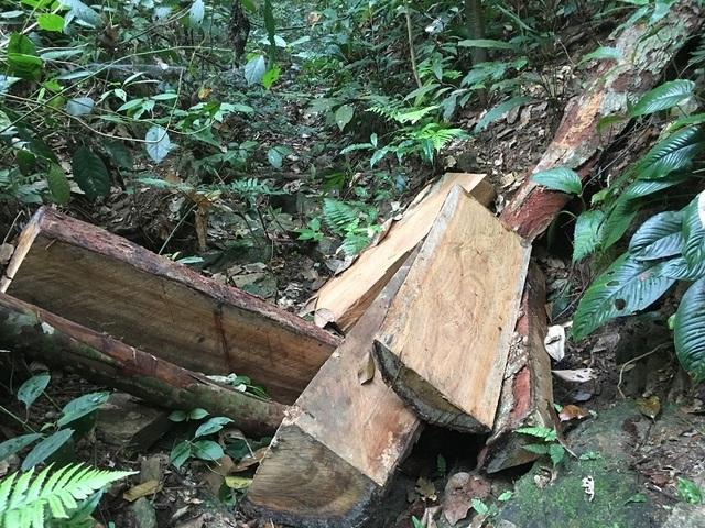 Khen thưởng chuyên án phá rừng gỗ lim tại lâm phận Trường Sơn - 3