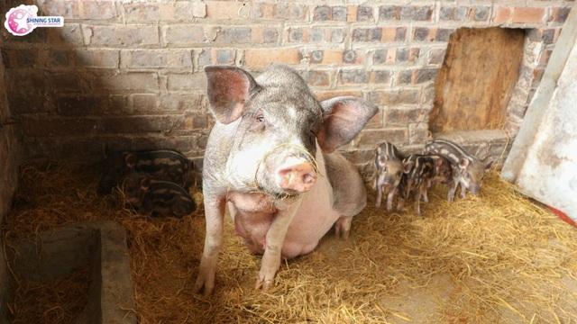 Lo âu lợn nhiễm sán, các trường mầm non đối phó ra sao? - 1