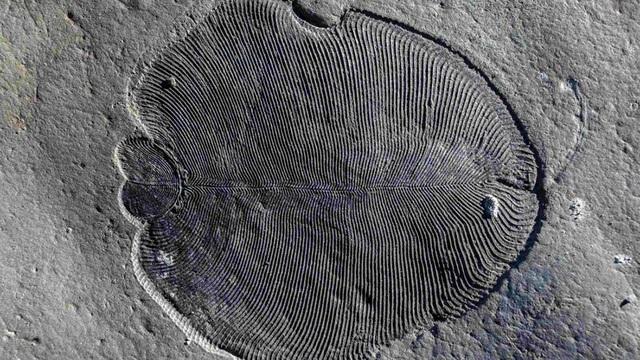 Động vật được biết đến sớm nhất trên Trái Đất có thể đã rất phát triển - 1