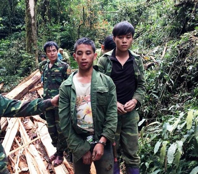 Bắt hai đối tượng người Lào chặt hạ cây sa mu ở khu bảo tồn - 1