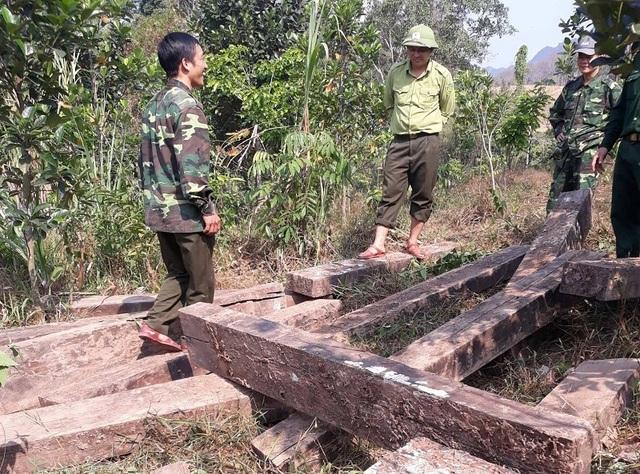 Phát hiện 3 hầm giấu gỗ nghi là tang vật vụ phá rừng ở Phong Nha - Kẻ Bàng - 3