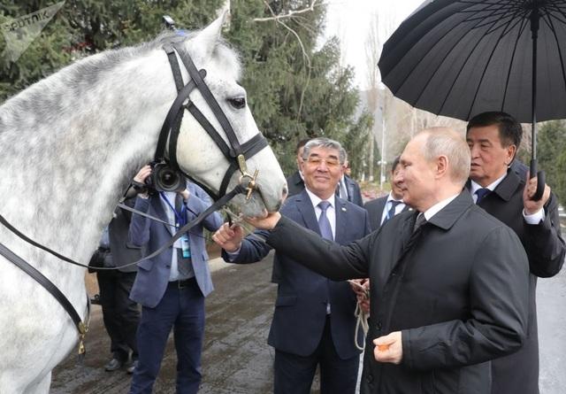 Những món quà bốn chân đặc biệt của Tổng thống Nga Putin  - 2