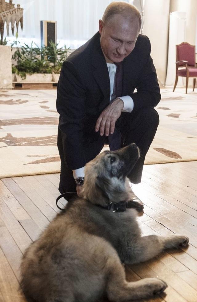Những món quà bốn chân đặc biệt của Tổng thống Nga Putin  - 8