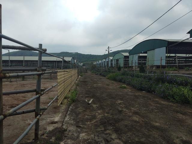 Số phận trái ngược của hai dự án chăn nuôi bò khủng tại Hà Tĩnh - 1