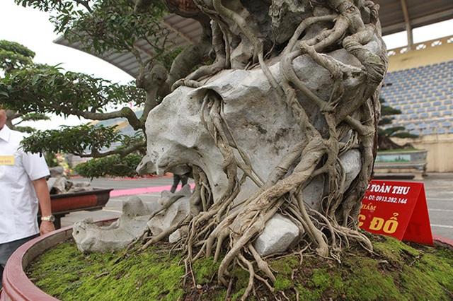 """Kiệt tác sanh cổ """"thác đổ ngồi đá"""" hiếm có của đại gia Phú Thọ - 10"""