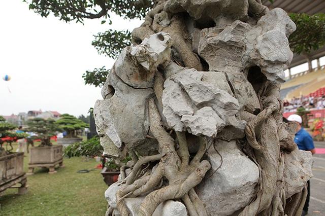"""Kiệt tác sanh cổ """"thác đổ ngồi đá"""" hiếm có của đại gia Phú Thọ - 11"""