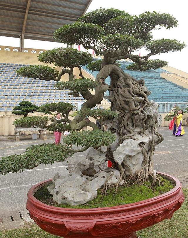 """Kiệt tác sanh cổ """"thác đổ ngồi đá"""" hiếm có của đại gia Phú Thọ - 16"""
