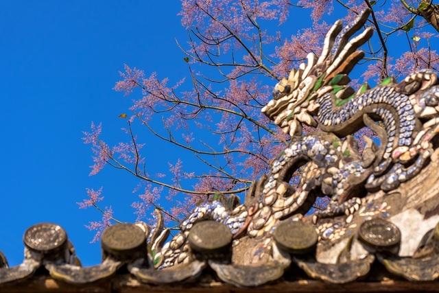 Hoa ngô đồng đẹp ngỡ ngàng trong Đại Nội Huế - 10