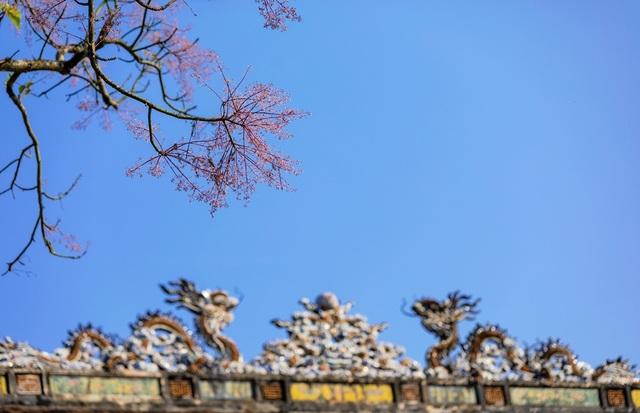 Hoa ngô đồng đẹp ngỡ ngàng trong Đại Nội Huế - 14