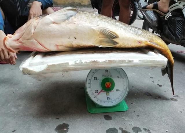 Người Hà thành mạnh tay chi gần chục triệu để mua 1 con cá chép - 1