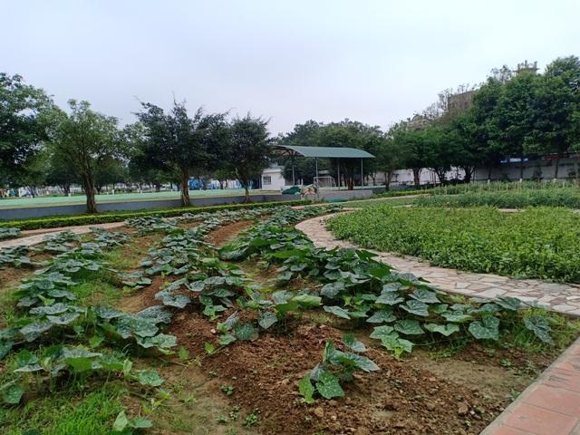 Bất cập trong quản lý nguồn thực phẩm đưa vào trường học - 2