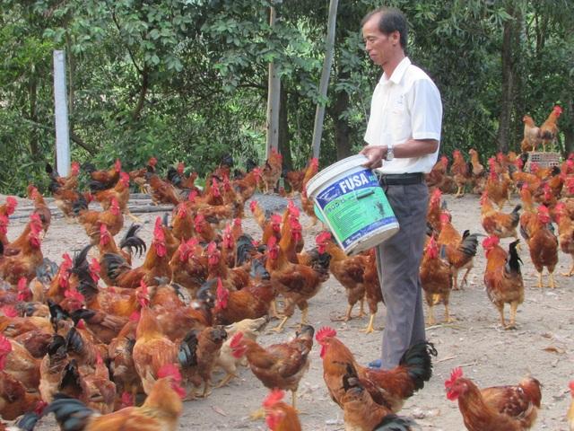 Bỏ nghề tài xế về nuôi gà, thu lãi 150 triệu đồng/năm - 1