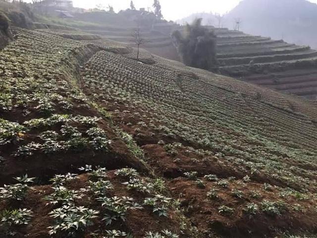 Công ty Akina Đông Á đầu tư phát triển cây Đương quy Nhật Bản chất lượng cao tại Việt Nam - 1
