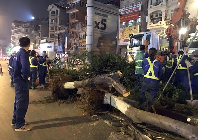 Hà Nội bất ngờ nhổ bỏ hàng trăm cây phượng trong đêm - 4