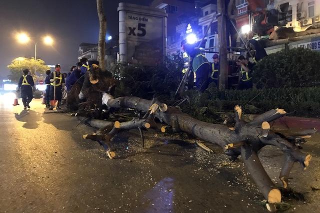 Hà Nội bất ngờ nhổ bỏ hàng trăm cây phượng trong đêm - 8