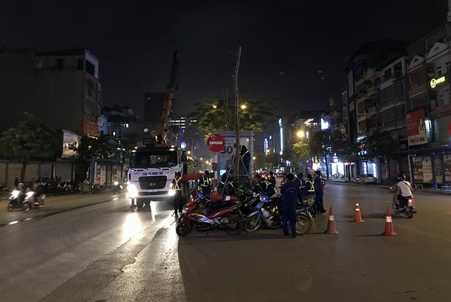 Hà Nội bất ngờ nhổ bỏ hàng trăm cây phượng trong đêm - 3