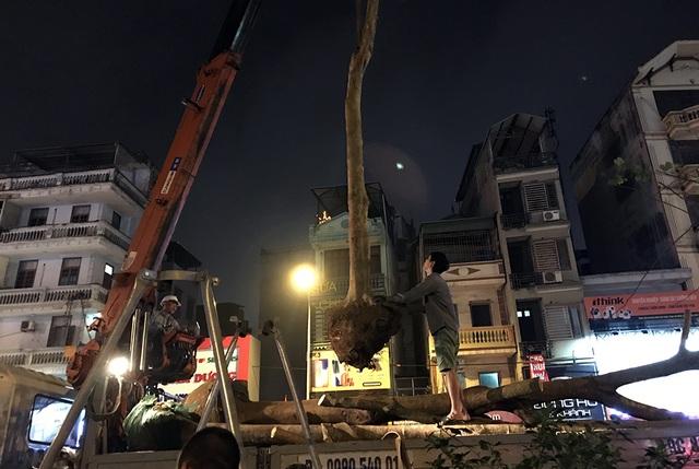 Hà Nội bất ngờ nhổ bỏ hàng trăm cây phượng trong đêm - 9