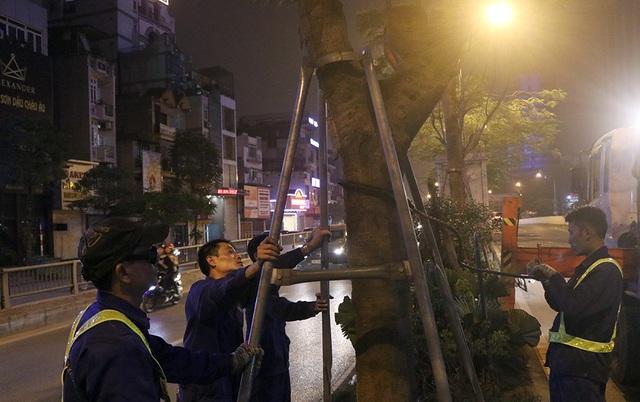Hà Nội bất ngờ nhổ bỏ hàng trăm cây phượng trong đêm - 1