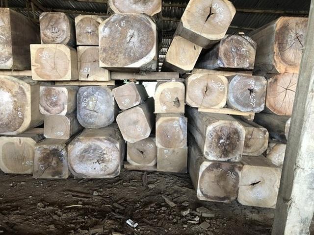 Tỉnh Quảng Nam tạm cấm nhập khẩu gỗ