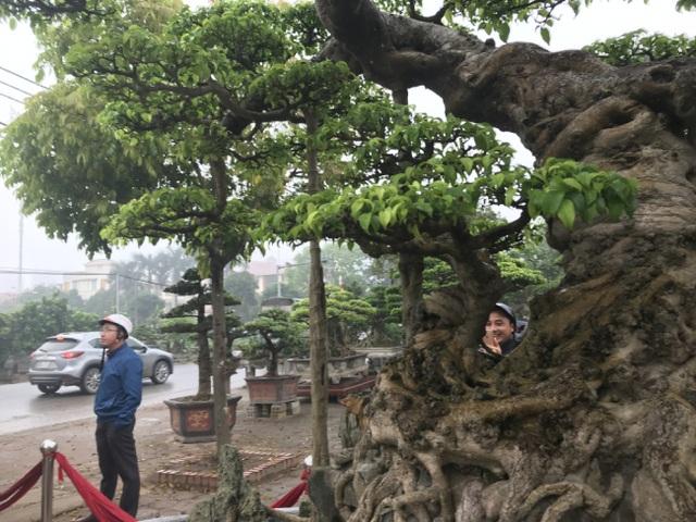 Chiêm ngưỡng cây sanh hàng trăm tuổi có giá triệu đô ở Hưng Yên - 11