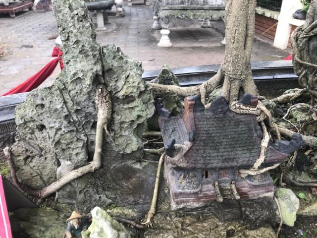 Chiêm ngưỡng cây sanh hàng trăm tuổi có giá triệu đô ở Hưng Yên - 12
