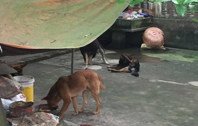 Thả rông đàn chó cắn chết người, chủ nuôi có thể bị phạt đến mấy năm tù? - 1