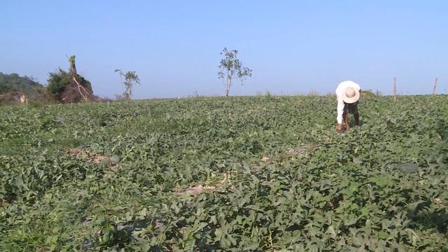 Triệu tập nhiều đối tượng vụ côn đồ cướp bát cơm của nông dân nghèo tại Phú Yên - 1