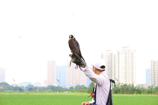 Thú chơi chim ăn thịt đi săn mồi độc đáo ở Hà Nội - 2