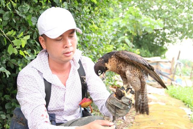 Thú chơi chim ăn thịt đi săn mồi độc đáo ở Hà Nội - 6