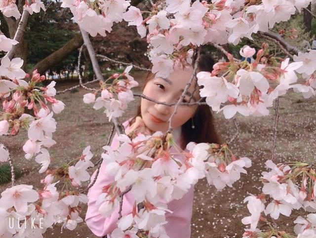 Ngắm hoa anh đào nở - Ngẫm về sự thanh cao, khiêm nhường của người Nhật - 1