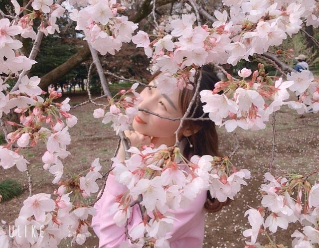 Ngắm hoa anh đào nở - Ngẫm về sự thanh cao, khiêm nhường của người Nhật - 2