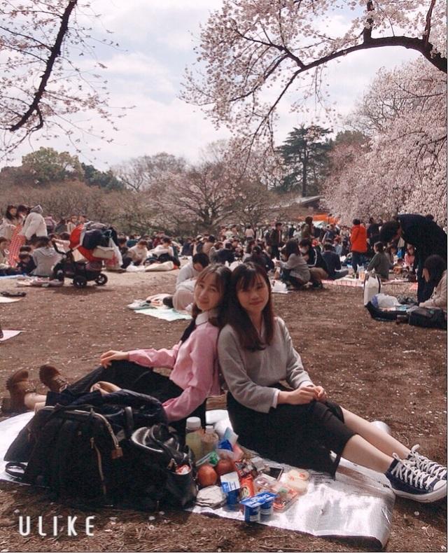 Ngắm hoa anh đào nở - Ngẫm về sự thanh cao, khiêm nhường của người Nhật - 4