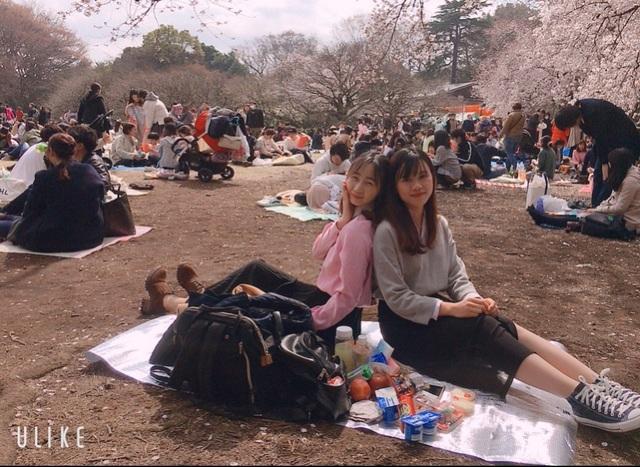Ngắm hoa anh đào nở - Ngẫm về sự thanh cao, khiêm nhường của người Nhật - 7